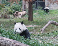 panda.jpg 200×160 11K